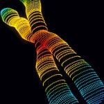 Describen gen asociado con el cáncer de colon