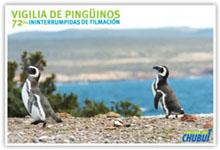 Retransmisión de la llegada de pinguinos a la Patagonia