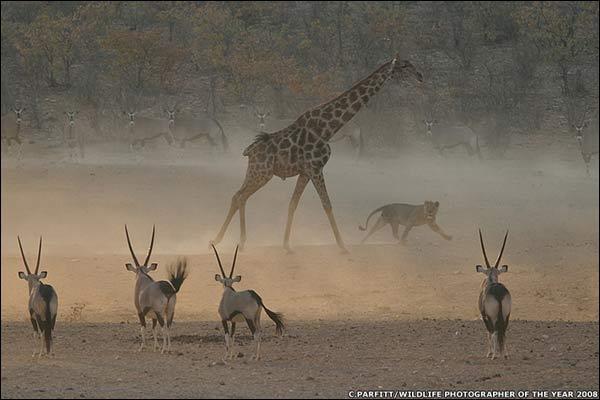 Fotografía ganadora y finalistas de Wildlife