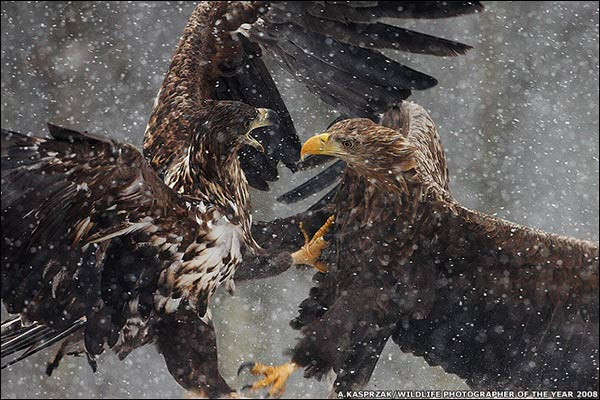 Fotografías ganadora y finalistas de Wildlife