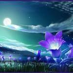 Midnight Dreams poemas