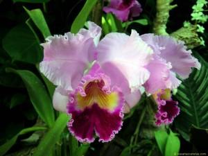 26 Wallpapers de orquídeas