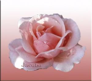 La luna y la rosa Poemas