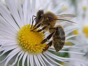 Las abejas saben de números