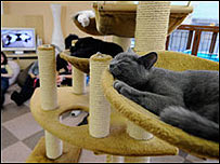 La gata Lola calma las ansias de tener mascota entre los japoneses