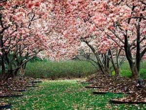 La Primavera es para todos