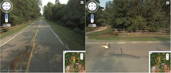 Street View atropalla a un cervatillo