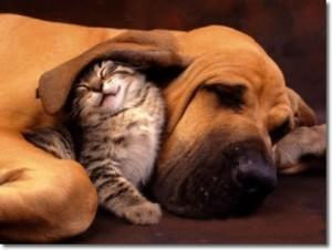 Sobre los animales - Frases Célebres