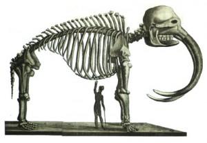 Dibujos para colorear de esqueletos de humano y animales