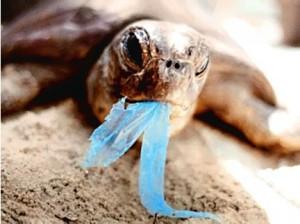 Porque se deben de prohibir las bolsas de plástico