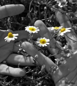 """Amor de tarde"" - Poemas"