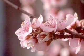 """""""El florecido sueño"""" Poemas"""