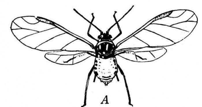 Recopilación de dibujos para colorear de insectos