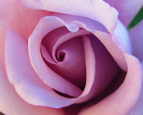 Rosas para los amigos en su día