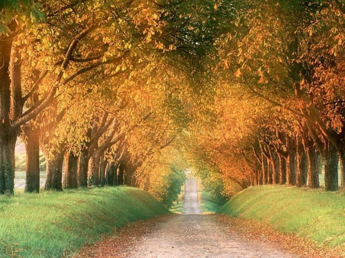 Recopilación de wallpapers de otoño