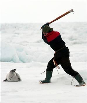 Vancouver 2010 y la matanza de focas