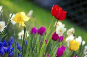 El 21 de marzo celebramos a la Primavera y a la Poesía
