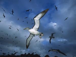 """""""El Albatros"""" - Poemas"""