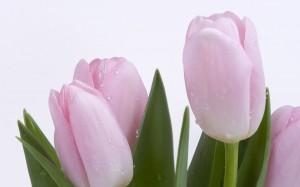 """Cientos de imágenes gratuitas alusivas al Día de la Madre"""""""