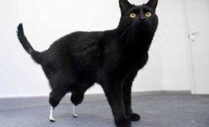 Gato convertido en biónico