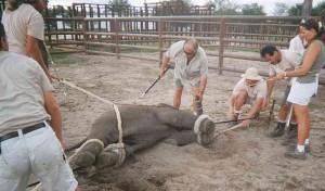 ¿Te gusta el circo? ahora lo pensarás dos veces: Crueldad con los animales