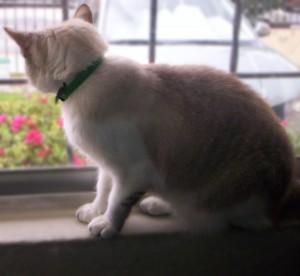 A mi gatita Bisha... siempre estarás entre nosotros