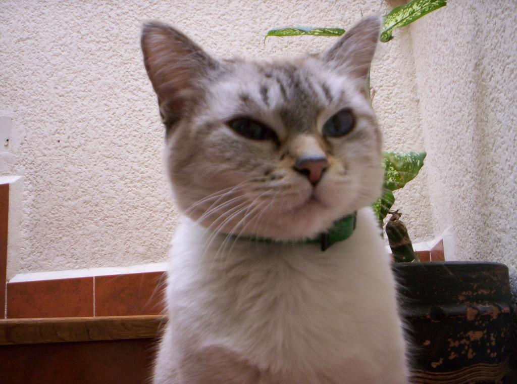 """""""Oda al gato"""" - Poemas"""