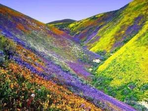 """Sobre la Primavera"" Frases Célebres"