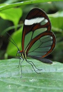 Fantástica exhibición de mariposas vivas en Londres