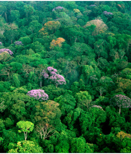 """""""De la selva"""" - Poemas"""