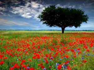 Y nuevamente abril a flor de cielo... - Poemas