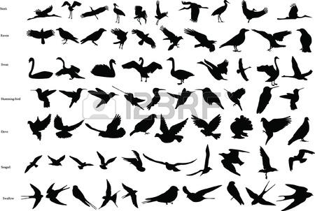 13484918-las-siluetas-de-las-cig-enas-cuervos-palomas-colibries-golondrinas-cisnes-y-gaviotas-123RF