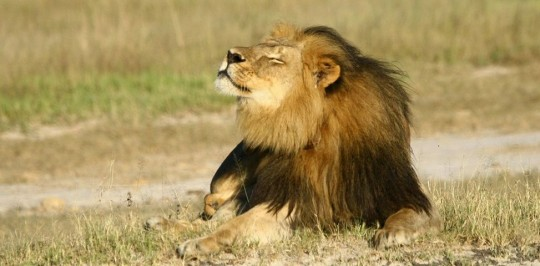 Cecil-leon-