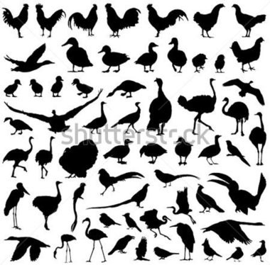 aves-vectores-farm-birds-silhouettes-big-vector-shutterstock