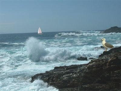 mar con velero y gaviota