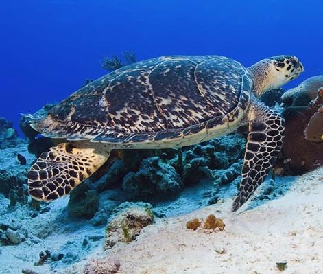 tortugas copia