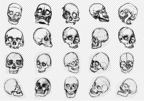 skull-brushes-calaveras-craneos-static-brusheezy